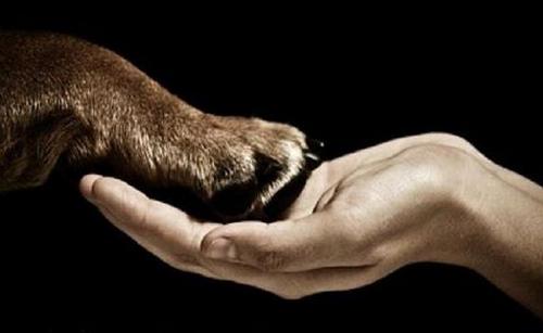 animal-and-human