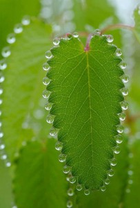 130516_geometria-en-la-naturaleza_beautiful-amazing-world