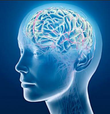 Tamaño_del_cerebro